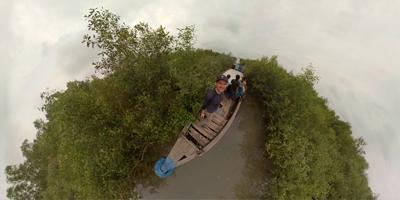 Mangroves in Bangladesh