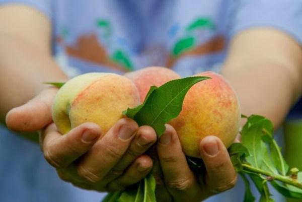 fresh-local-peaches