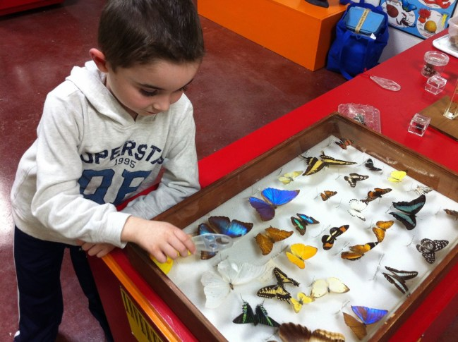 Examining butterflies in the Museum