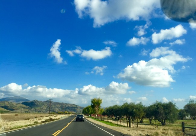 Blue skies, puffy clouds and fall trees guided our way to the Cat Haven