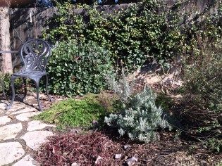 AFTER: Pruning is instant gratification! Your beds look neat and tidy and ready for Spring!