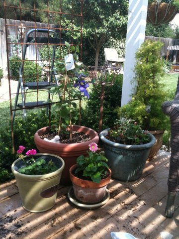 container gardening with annuals