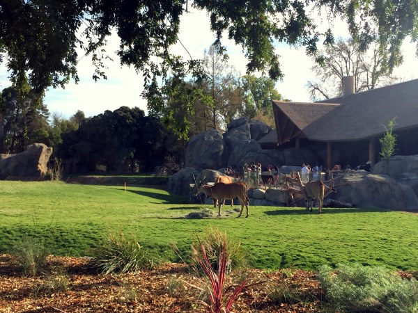 The dining area overlooks the animals