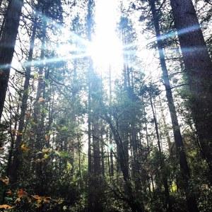 Day Hike Destination: Lewis Creek Trail