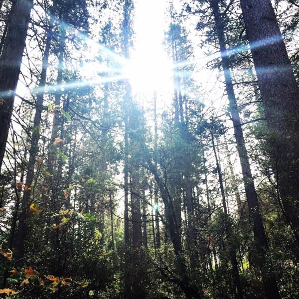 Sun through the trees at Lewis Creek Trail