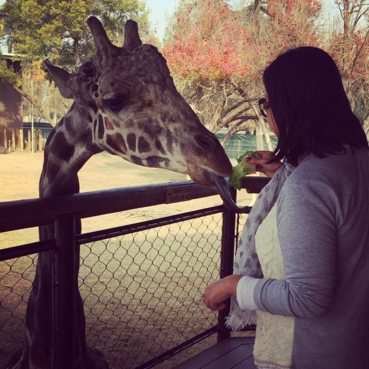 Opening of Fresno Chaffee Zoo's African Adventure