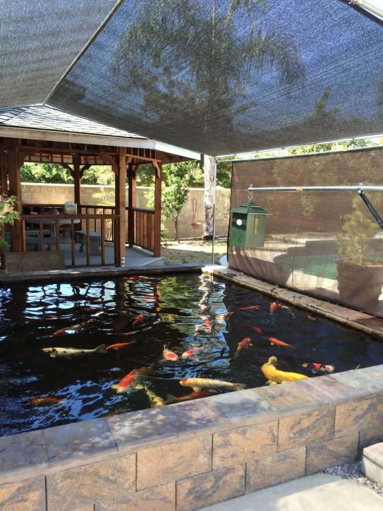 A covered koi Pool