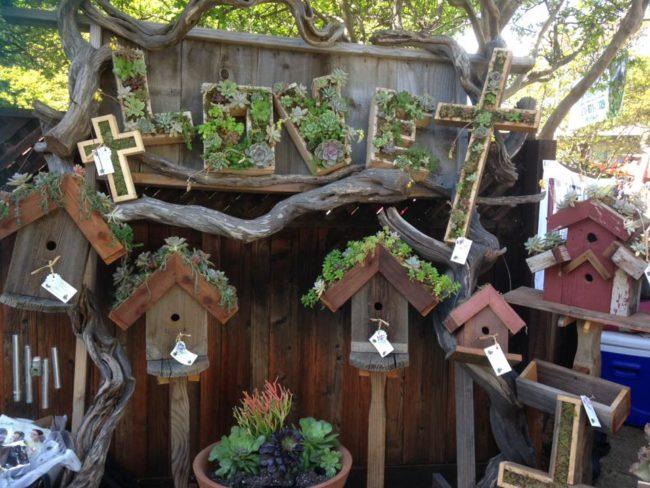 Kileen's Garden Boutique succulents