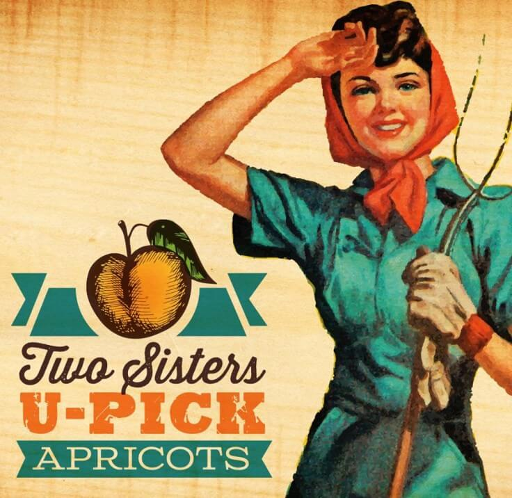 Two Sisters U-Pick Apricots