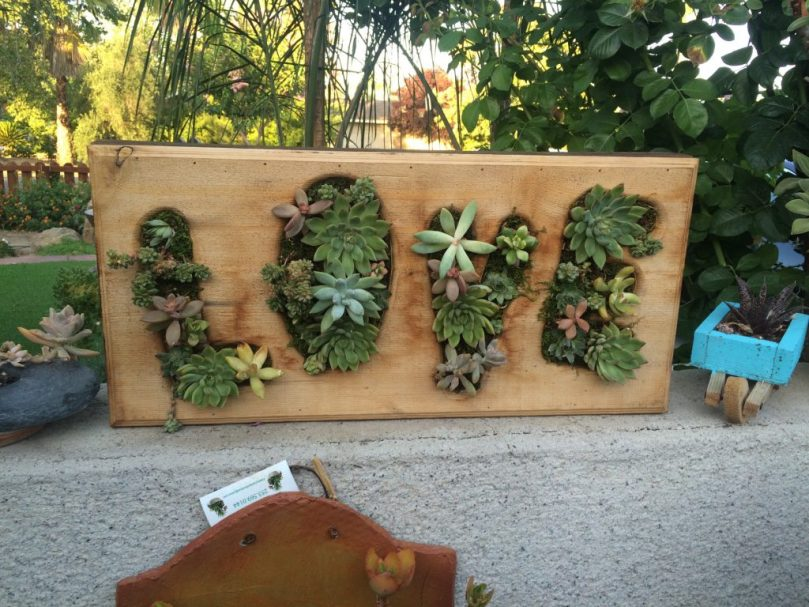 succulent driftwood with the letters LOVE