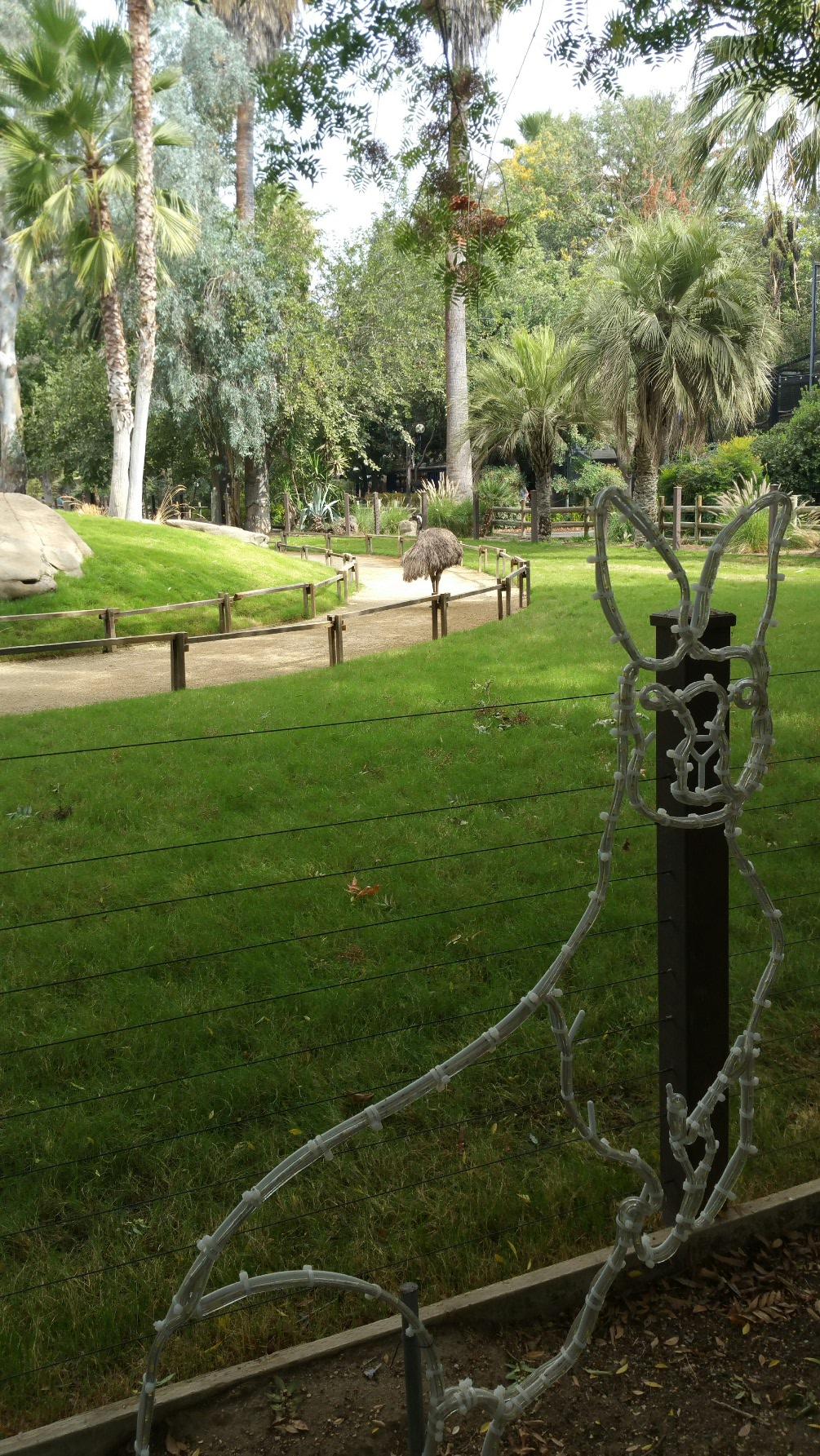 Emu is on guard duty.