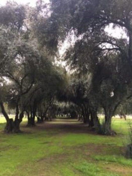 kearney park