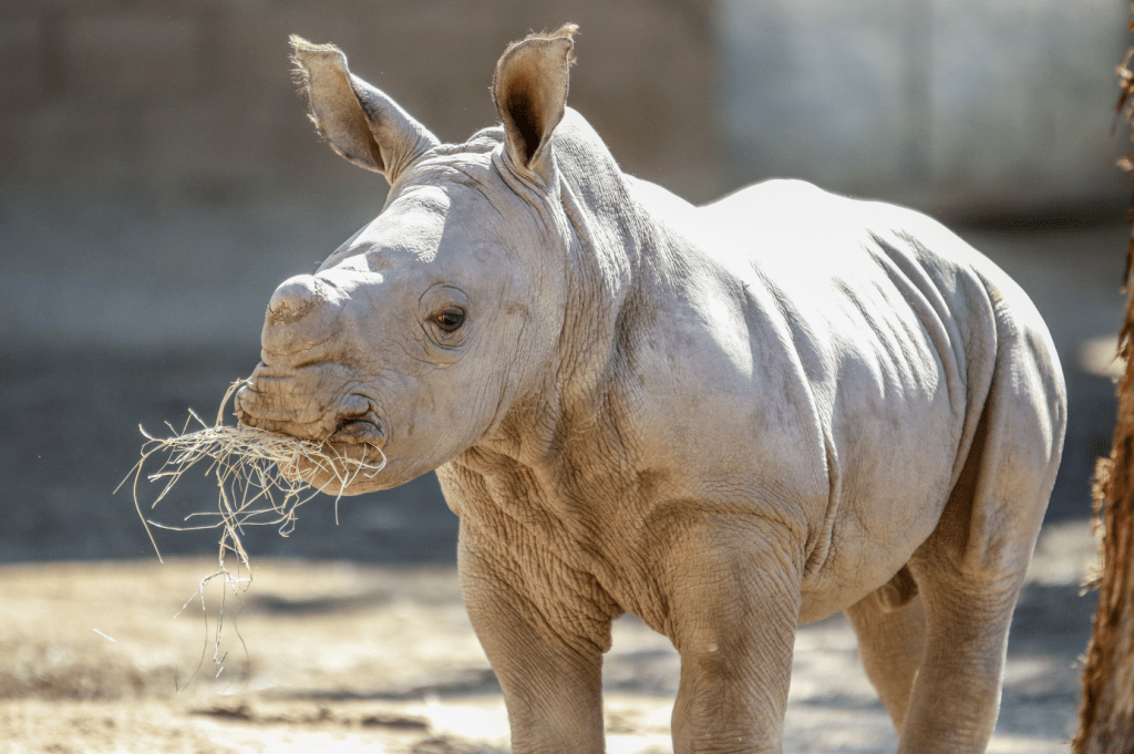 Behind the Scenes at Fresno Chaffee Zoo