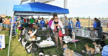 Find Your New Best Friend at Valley Animal Center's Super Adoption