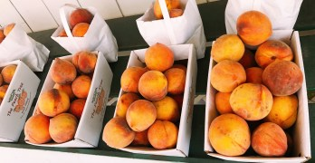 Get your fruit fix at Wawona's Peach Tree stand