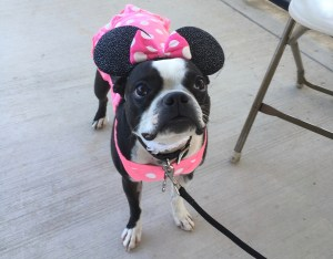 Dogs in costumes bring the cute to the Furry Fall Festival