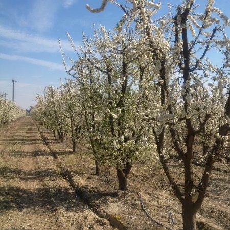Blossom trail time