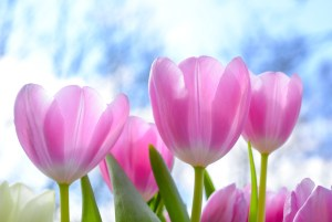 4 family-friendly activities to help you welcome spring in FresYes