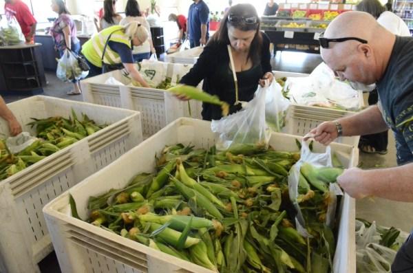 Fresno State corn
