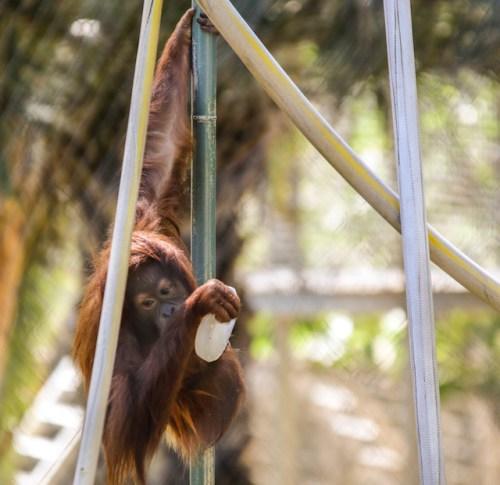 Cool Zoo