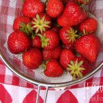 Erdbeer Topfen Creme für Tortenfüllungen – vegetarisch