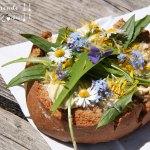 Kleine Wildkräuter-Kunde plus essbare Wild-Pflanzen