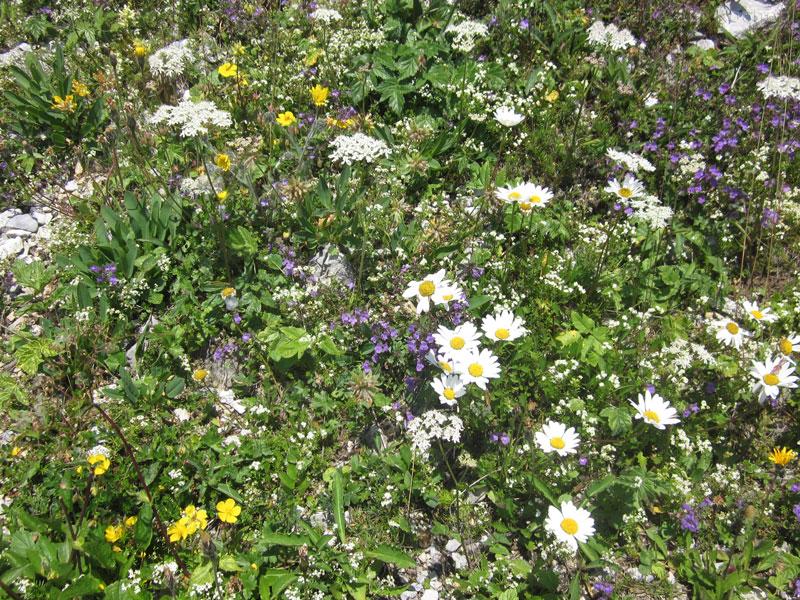Blumen-Rax-03