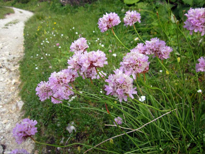 Blumen-Rax-07