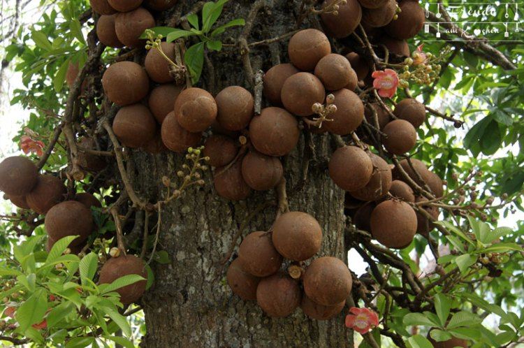 Botanischer Garten -- Kandy - Reisebericht Sri Lanka - Freude am Kochen