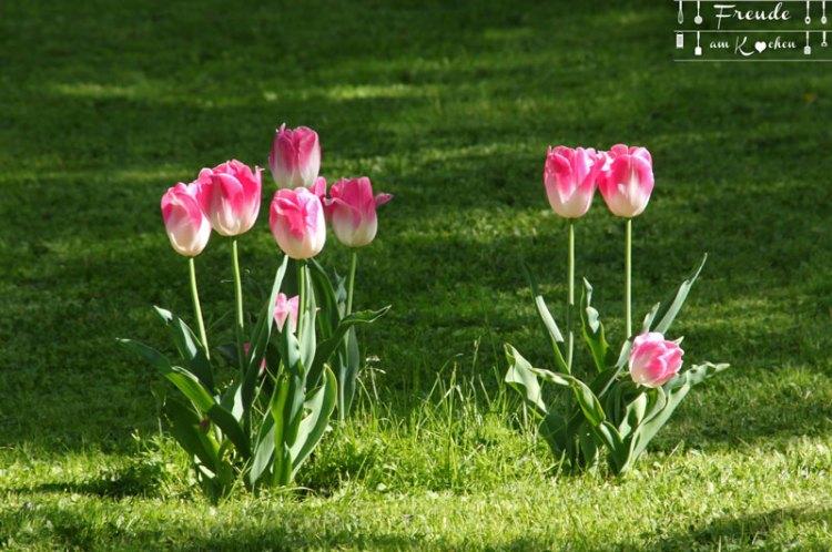 Tulpen - Gössl - Grundlsee - Ausseer Land - Freude am Kochen - Reisebericht