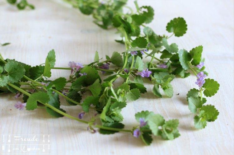 Gundermann - essbare Blüten - Wildkräuter - Freude am Kochen