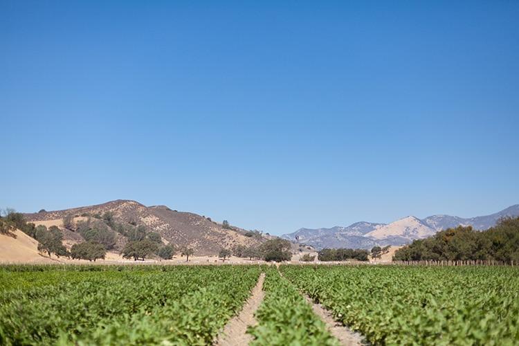 Tutti-Frutti-Farms-2