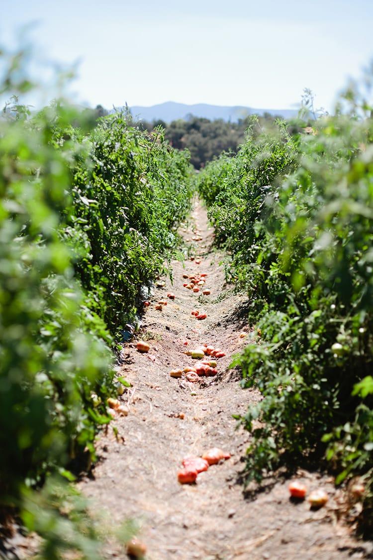 Tutti-Frutti-Farms-7