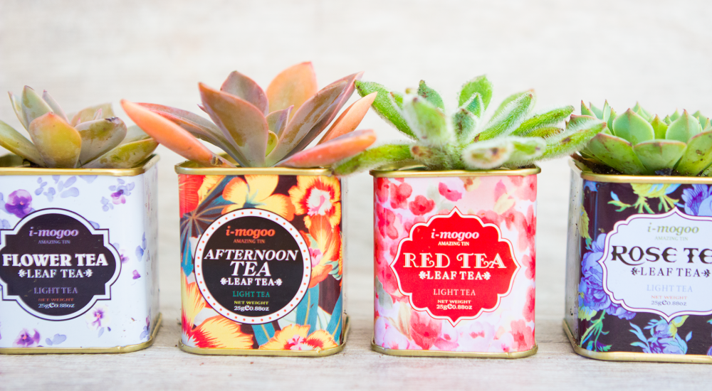 Sarah Johnsons DIY succulent planter tea tins