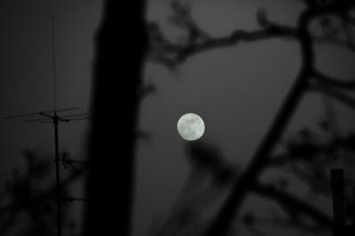 Nightowlism