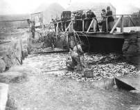 Catching herring at Mattapoisett.