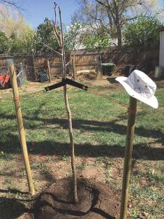 Tree planted over Shannon's father's bio-urn. The hat on the support is one he frequently wore.