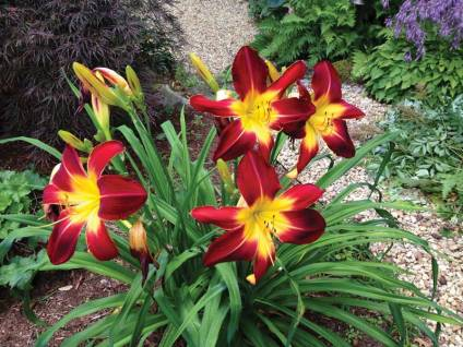 katiegreen-flowers