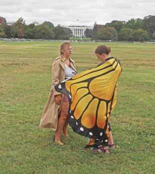 Kallan in her wings before striking at the White House, September 2019. Photos © Carl Benson.