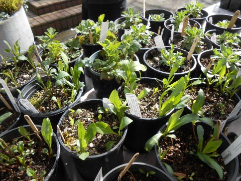Native Plant Sale. March 25th, 2017