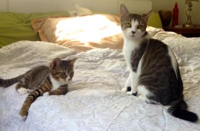 MAGGIA and MIA