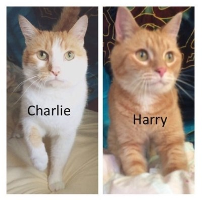 HARRY and CHARLIE