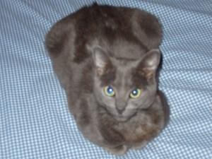 Millie the wonder cat