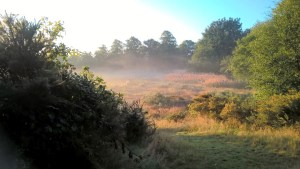 Swirling mist