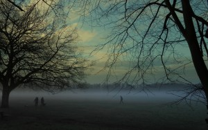 Misty Winter View