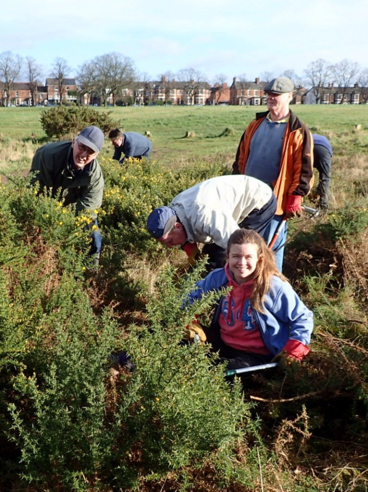 Volunteers Removing Gorse