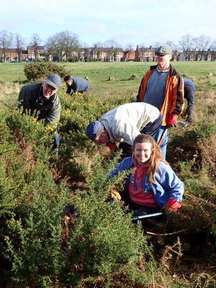 Volunteers Removing Gorse