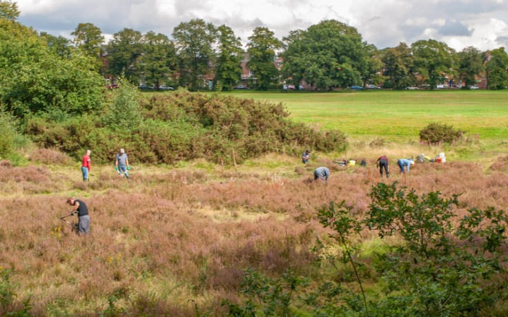 Volunteers on Knutsford Heath