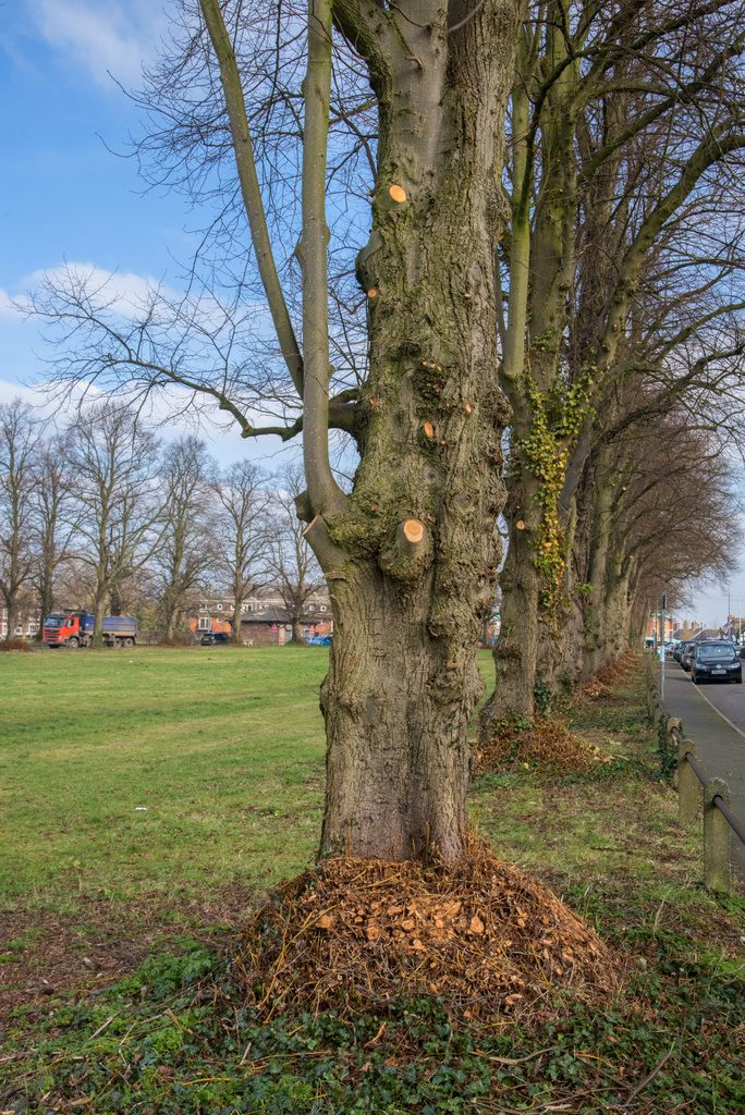 Heath Tree Work