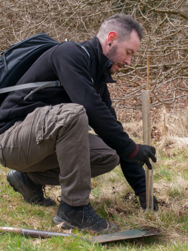 Planting Rowan Tree